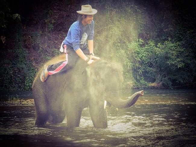 Bain des éléphants