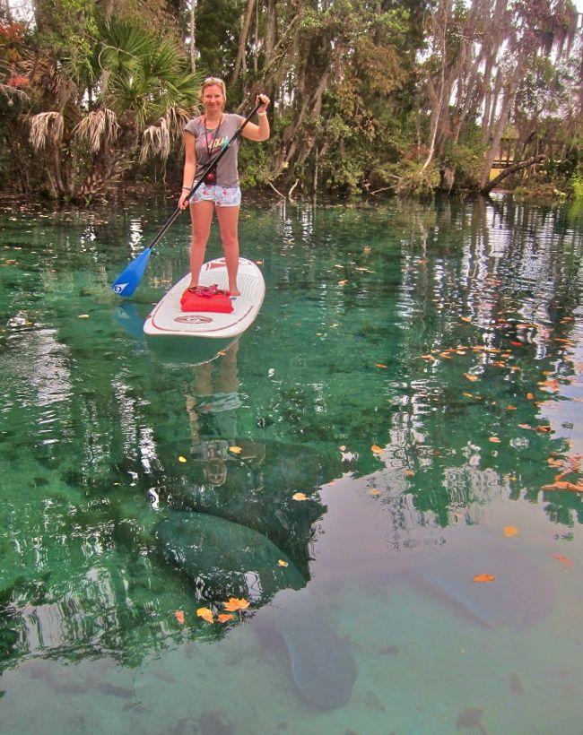 Paddle avec les lamantins à Crystal River