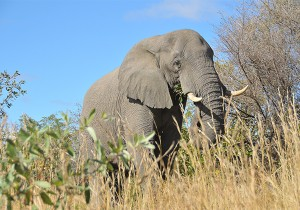 Elephant Park Kruger (Photo Heidi Lafeuil)