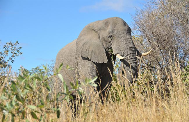 Elephant Park Kruger (Photo Heidi Lafeuil)