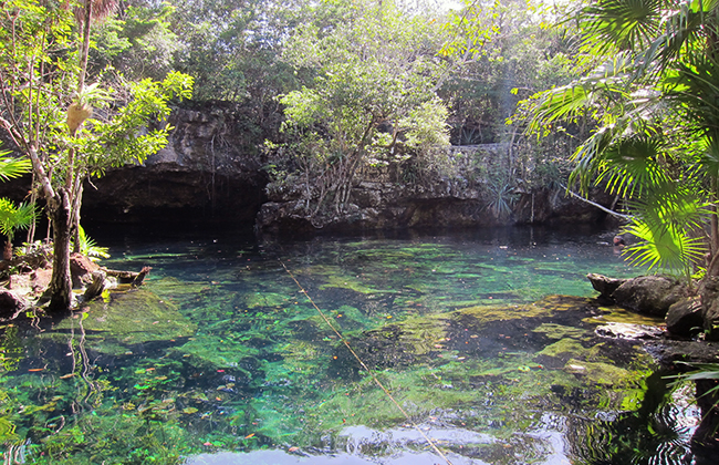 Cenote Chichen Ha jungle