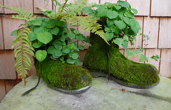 Chaussures végétales